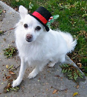 Top Dog Holiday Hat