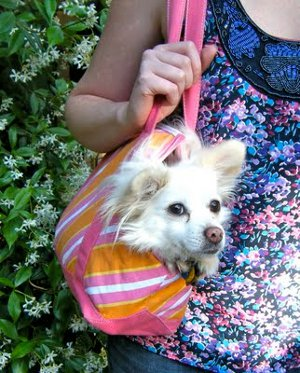 Legally Adorable dog tote