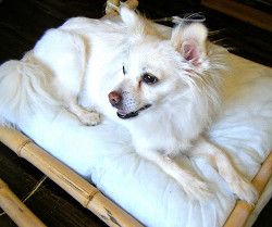 Doggy Bamboo Bed